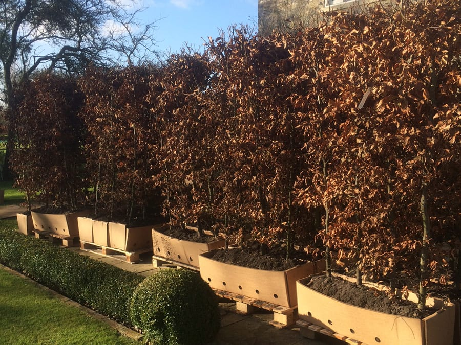 instant-hedges-1