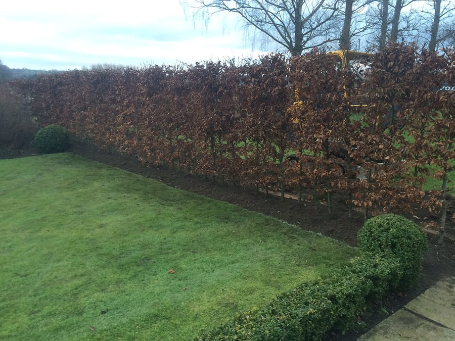 instant-hedges-3