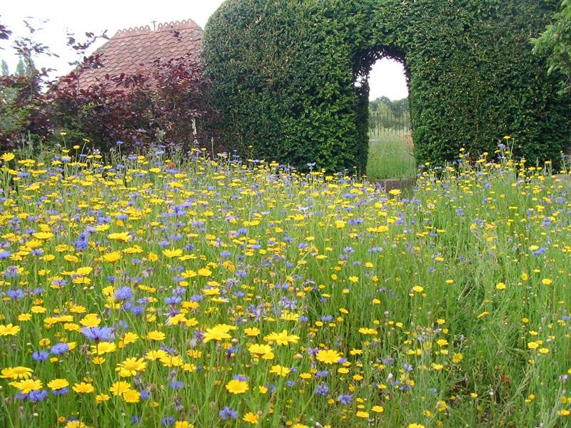 malmesbury-walled-garden-12