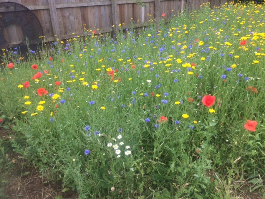 meadow-sown-april-15