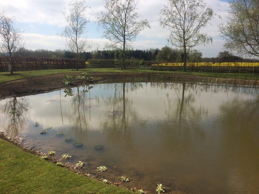 mm-pond-19