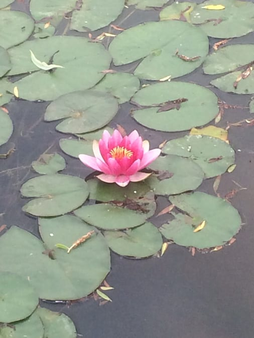mm-pond-22