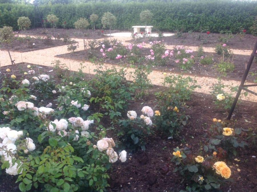 rose-garden-flower-1