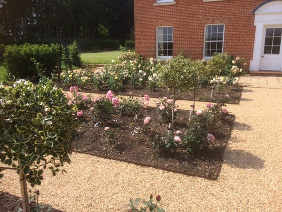 rose-garden-flower-3